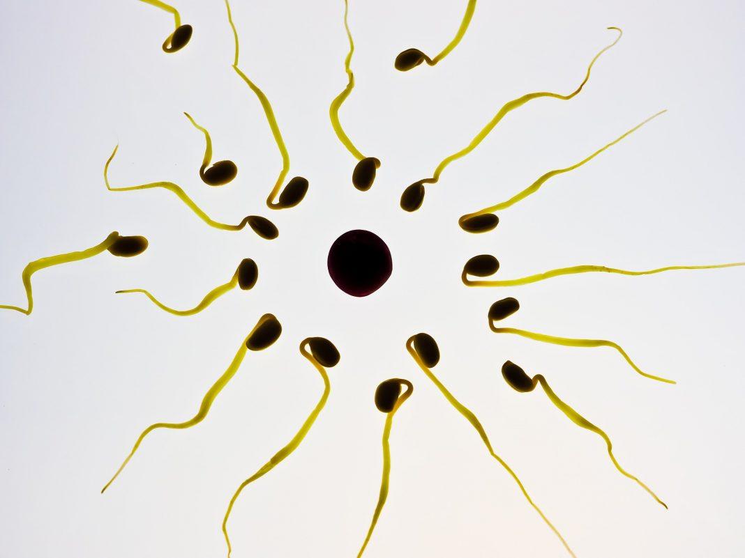 comment savoir si on est en période d'ovulation